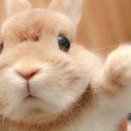 Yêu Thỏ