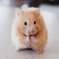 Yêu Chuột