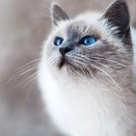 Yêu Mèo