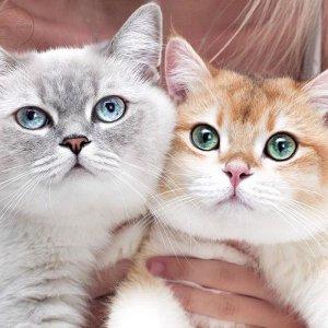 Lili và Loli ngày rét hà nội